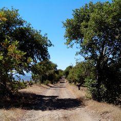 Caminando entre alcornoques. Walking among oaks. #nature #naturaleza #senderismo #trekking