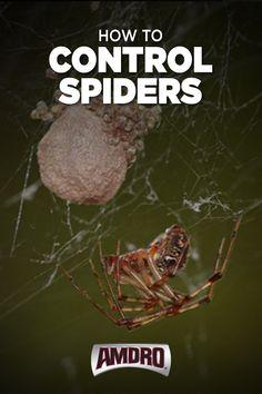 Ant Pest Control, Bug Control, Garden Bugs, Garden Pests, Organic Gardening, Gardening Tips, Spider Spray, Bug Spray Recipe, Garden Solutions