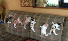 One little, two little, three little kittens, four little, five little, six little kittens . . .