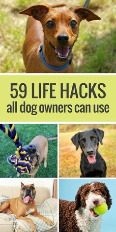 Here's 59 simple life hacks for dog owners. From cleaning up dog hair with rubbe. Here's 59 simple life hacks for dog owners. From cleaning up dog hair with rubbe… , Here's 59 Training Your Puppy, Dog Training Tips, Safety Training, Dog Care Tips, Pet Care, Pet Tips, Rottweiler, Beagle, Boxer Pup