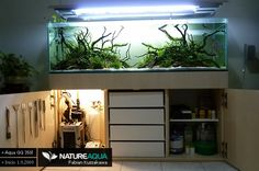 Aqua Low tech Discus « 350l - Aquascaping - Aquatic Plant Central Diy Aquarium Stand, Aquarium Design, Aquarium Ideas, Tank Stand, Aquarium Decorations, Discus, Aquatic Plants, Planted Aquarium, Freshwater Aquarium