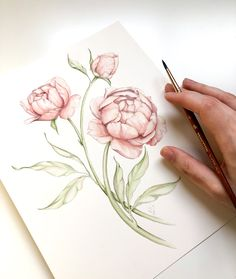 Loose Watercolor Peony - Watercolor Tutorial for Beginners — Blushed Design Realistic Flower Drawing, Simple Flower Drawing, Peony Drawing, Easy Flower Drawings, Beautiful Flower Drawings, Floral Drawing, Drawing Flowers, Tiny Flower Tattoos, Easy Drawings