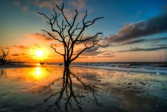 "The artist has named this ""Reflection"". It was taken at Botany Bay ."