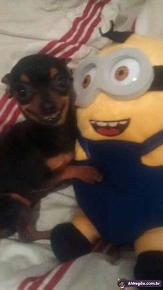 these images are cursed this image will protect you Funny Animal Jokes, Funny Dog Memes, Cute Memes, Cute Funny Animals, Funny Cute, Funny Dogs, Funny Captions, Animal Humor, Animal Quotes