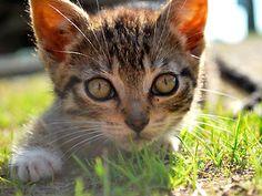 Photo gallery: 15 fantastic kittens - Slide 1 - Canadian Living