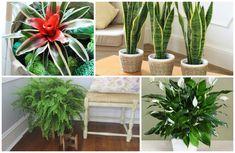 12 домашних растений, которые могут выжить даже в самом темном углу.