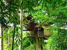 The Gibbon Experience, Laos