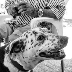 Making friends in and (instructions two photos that way <<<<) Bw Photography, Street Photography, Dog Photos, That Way, Black And White Photography, Monochrome, Stripes, Friends, Dogs