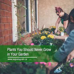 Some plants do not belong in your garden. Whether they can pose certain hazards or are too high-maintenance, you should think twice about introducing them to your landscape. Which plants are these? Read more to find out. High Maintenance, Irrigation, Gardening Tips, How To Find Out, Poses, Landscape, Lighting, Plants, Figure Poses