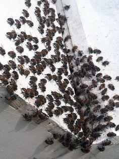 Bee Season: Baby Bees?