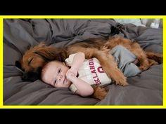 Dog Massage Little Baby Child Baby enjoying massage by his pet dog - YouTube