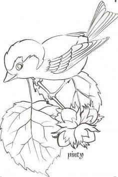 Madarak Es Fak Napja Bird Coloring