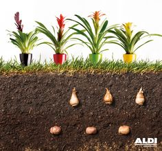 Tu jardín bonito por fuera, y por dentro #farmerfood