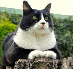 black & white cat   Ronron