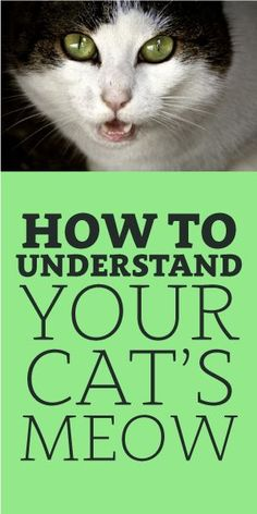 How To Understand Your Cat's Meow: