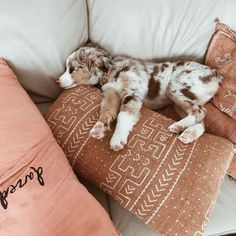 What could be a better home accessory than this pup?