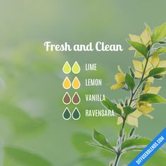 Fresh and Clean — Essential Oil Diffuser Blend **use eucalyptus in place of ravensara Essential Oil Supplies, Essential Oil Diffuser Blends, Doterra Essential Oils, Young Living Essential Oils, Essential Oil Combinations, Ravintsara, Perfume, Sparkle, Diffuser Recipes