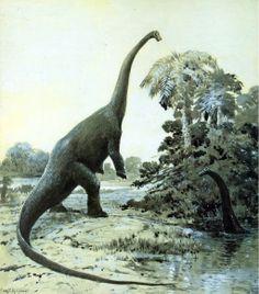 Dinosaurios - Taringa!