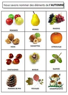 imagier de l'automne ( vocabulaire de l'automne) Autumn Activities For Kids, Fall Preschool, Leaf Crafts, Fall Crafts, Keep Calm And Diy, September Themes, Cycle 1, Petite Section, Cool Science Experiments