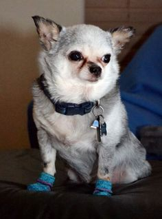 Mom says that winter weather is coming in so she put some socks on me. Seriously Mom?! LOL!