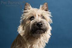Hondenfotograaf Amsterdam - PetPlan Winner actie - Honden op de Winnershow-19