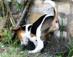 Homemade Dog Repellent for Dirt    http://www.ehow.com/way_5163448_homemade-dog-repellent-dirt.html