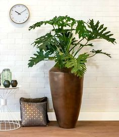 Grote plant in luxe pot | Chicplants Pink Drive, Seth Godin, New Earth, Green Plants, Plant Decor, Indoor Plants, House Plants, Gardening Tips, Floral Arrangements