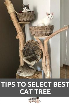 All natural cat tree handmade by Schnurrwerk (Germany) - Katzen - . All natural cat Cool Cat Trees, Cool Cats, Grand Chat, Diy Cat Bed, Cat Beds, Cat Playground, Cat Room, Cat Condo, Wood Tree