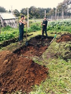 Two years ago we decided to experiment with Hugelkutur, a form of raised garden beds using rotting timber to create a mound of organic matter, air pockets and soil life. The reasons we were interested in Hugelkultur gardening : We need to create growing areas that require minimal water as we have very long dry summers.  We have an …