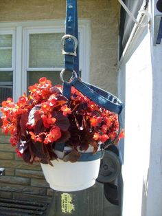 An old halter can be used as a flower basket hanger.  It's a great way to decorate the porch with a treasured halter that brings many memories.    Ways to reuse things around the barn for beauty and function!  From MyHorseWorld.com