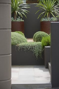 House Plant Maintenance Tips Similar Planting For Revised Front Garden Balls, Dichondra 'Silver Falls' And Corten Planters