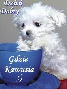 Kartka pod tytułem Dzień dobry Animals And Pets, Cute Animals, Good Morning Inspiration, Weekend Humor, Good Morning Good Night, Cute Gif, Man Humor, Funny Faces, Cute Puppies