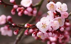 Cool PC Wallpapers Happy First Day of Spring Cherry Blossoms 1920 ...