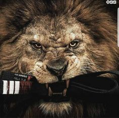 """Artwork for 50 Cent's upcoming album Animal Ambition which drops on June Two records """"Hold On"""" and """"Dont Worry Bout It"""" featuring Yo Gotti will be released next week. Previously: 50 Cent Talks New Show Power (Video) Judo, Muay Thai, Mr Probz, 50 Cent Albums, 50 Cent Music, Schoolboy Q, Yo Gotti, Ju Jitsu, Trey Songz"""