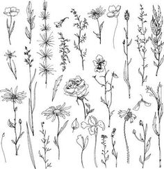 Stock Vector Illustration of floral doodle set of ink drawing herbs,leaves and flowers, doodle wild plants, monochrome black line drawing floral collection, hand drawn vector [. Art Floral, Floral Doodle, Floral Flowers, Wild Flowers, Flower Line Drawings, Drawing Flowers, Tattoo Flowers, Floral Drawing, Wild Flower Tattoos