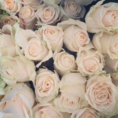 TBT when babe send me 400 White Rose  #tbt