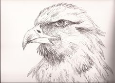 Eagle, East-Indian Ink, JM