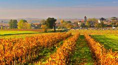 Vignes en Charente-Maritime : tout un savoir-faire pour la fabrication du Pineau des charentes et du Cognac | Charente-Maritime Tourisme #charentemaritime | #vignoble | #vignes