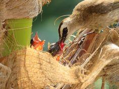 Bulbul Bird Bird Feeders, Yellow, Outdoor Decor, Teacup Bird Feeders