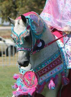 Arabian Horse costume - Arabian Horse Show - Western Competition Egyptian Stallion Breeding PIntabians~ Most Beautiful Horses, All The Pretty Horses, Animals Beautiful, Cute Horses, Horse Love, Grey Horses, Arabian Horse Costume, Arabian Horses, Arabian Costumes
