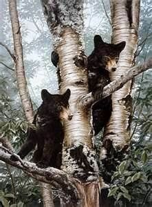 Image result for bear cubs painting images