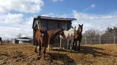 Quality horseback riding and ranch experiences. Riding lessons, cabins on the lake, rodeos, horseback vacations and trail riding for all levels. Ranch Farm, Ranch Life, Trail Riding, Horse Riding, Lakeside Cabin, Riding Lessons, Winter Cabin, Lake Cabins, Family Day