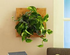 Wallflower Vertical Garden. Unique bamboo planters hang vertically on the wall like a picture frame and contain four foliage plants rooted in pouches inside. The frame has sides and a back to protect your wall from moisture, has an opening on the side to easily add water to an internal reservoir and includes all the needed hardware for mounting.