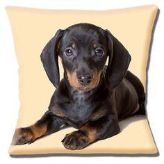 Black Tan Brown Dachshund Puppy Photo Print Close Up Pillow Cushion Cover Brown Dachshund, Dachshund Art, Dachshund Puppies, Weiner Dogs, Dachshunds, Happy Animals, Cute Animals, I Love Dogs, Cute Dogs