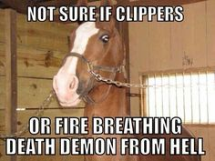 One of the girls in my 4-h group horse does this! we have both got lifted up the ground trying to keep his head still Equestrian Problems, Equestrian Quotes, Horse Girl Problems, Barrel Racing Horses, Pretty Horses, Horse Love, Beautiful Horses, Horse Barns, Horse Tack
