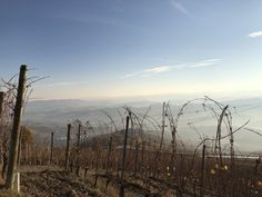 #lamorra #piedmont