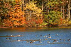 Hooks Creek Lake - Cheesequake State Park - Matawan NJ