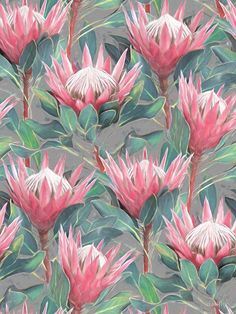 Pink Painted King Proteas on grey Art Print by micklyn - X-Small Protea Art, Protea Flower, Rose Gold Fabric, Interior Wallpaper, Floral Drawing, Grey Art, Flower Art, Art Flowers, Print Patterns