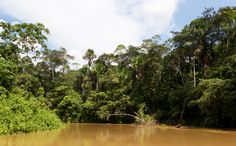 A first of its kind NASA-backed study has demonstrated that the Amazon rainforest may actually be helping us in the fight against global warming by virtue of the amount of carbon dioxide it is able to hold onto.  The highly technical study, which was carried out over seven years and involved a number of universities from across the globe,