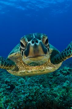 Sea Turtle, ready for his close-up.
